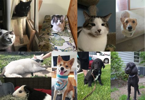 Behold! The adorable pets of The Heights Herald staff!